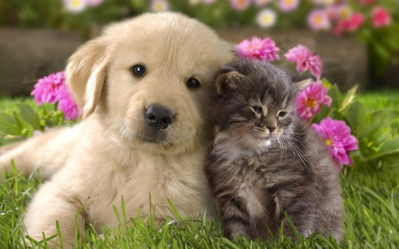 animal-cute-cat-and-dog-cuddling-cats-dogs_309803.jpg