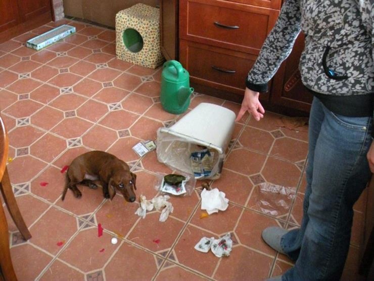03-guilty-dog.jpg