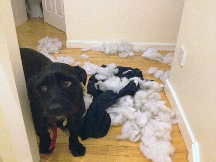 09-guilty-dog.jpg