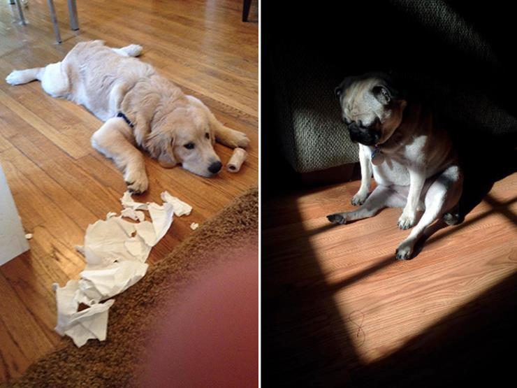 14-guilty-dog.jpg
