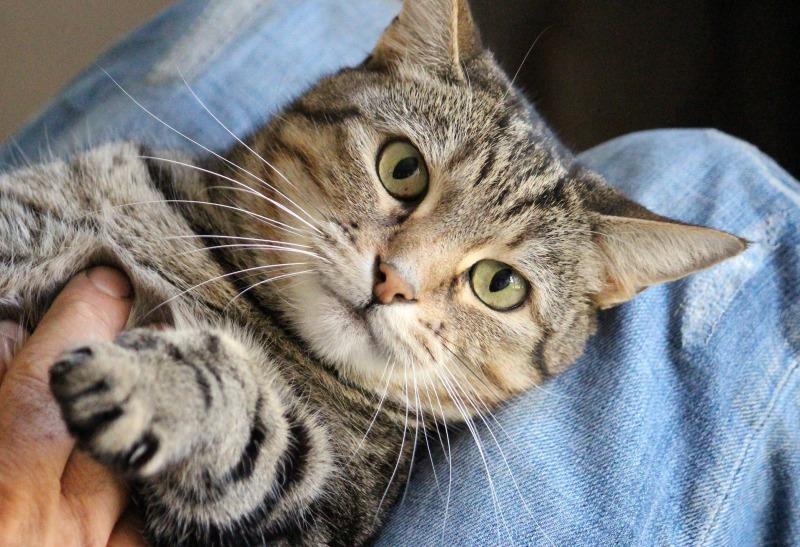 cat-1375793_1920.jpg