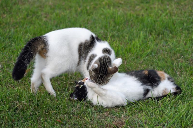 cat-2428535_1920.jpg