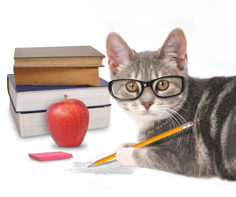How-to-discipline-cat