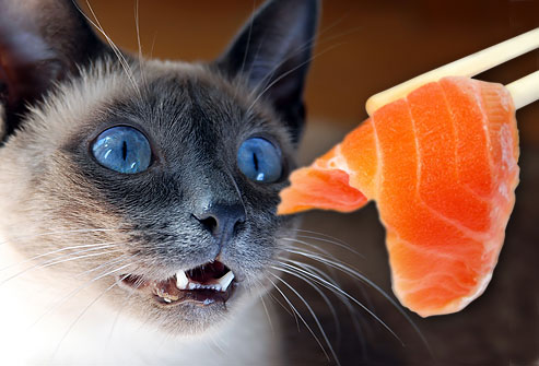 jiu_rf_photo_of_cat_eying_salmon_sushi