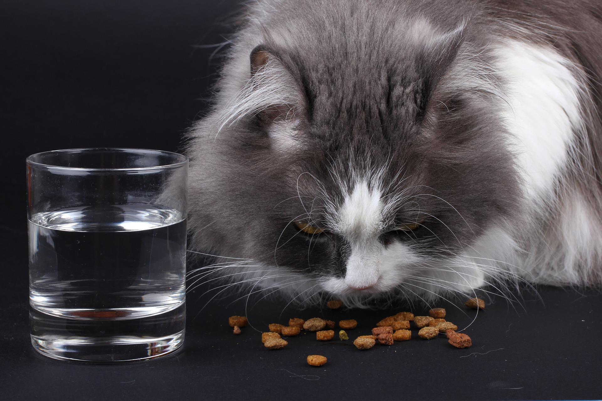 cat-1798147_1920