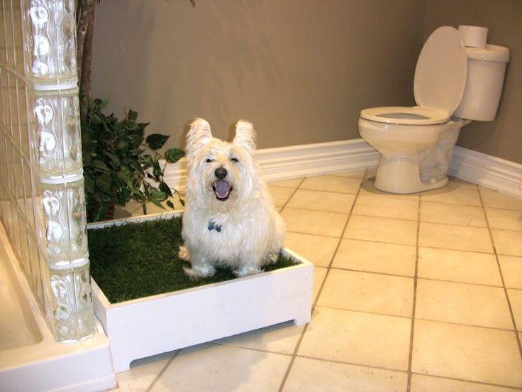 3e1ecd338e192754bfe598493d2ce5b7--indoor-dog-potty-pee-pee