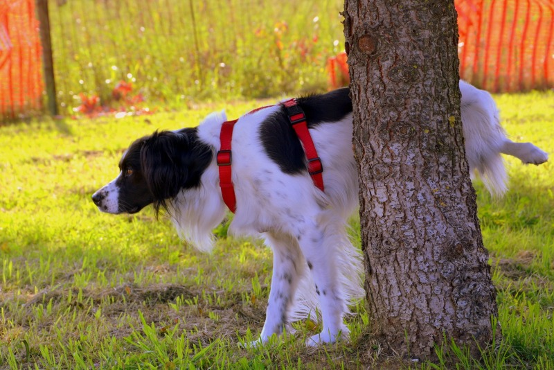 dog-1694209_1920